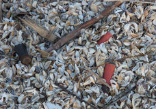 Shotgun Shell. Old shotgun shells are found amoung the shells of zebra mussels Royalty Free Stock Image