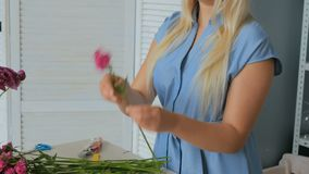 3 shots. Professional floral artist working with flowers at studio. 3 shots. Professional floral artist, florist working with flowers - pink turkish carnation at stock footage