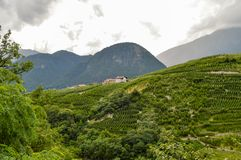 Shots of vineyards below a village in the dolomites in Italy Royalty Free Stock Photo