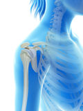 The shoulder joint Stock Photos