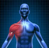 Shoulder muscle pain. Muscle pain represented by a blue human concept with the red shoulder anatomy highlighted showing the medical structure under the skin Stock Photos