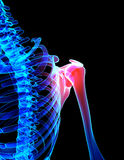Shoulder painful skeleton x-ray, 3D illustration. 3D illustration, shoulder painful skeleton x-ray, medical concept Royalty Free Stock Images