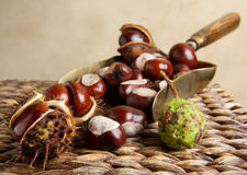 Shovel with chestnuts Stock Photos