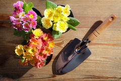 Shovel and cuttings Royalty Free Stock Image