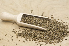 Shovel with dried fennel seed Stock Image