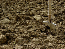 Shovel in the ground Stock Image