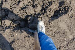 Shovel, the guy in sneakers digs the soil for planting royalty free stock images