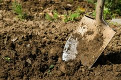 Free Shovel In The Ground Royalty Free Stock Photo - 25002915