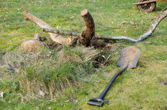 Shovel lie in yard near cut branches, garden work Stock Photography