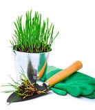 Shovel, rubber gloves and steel pot with green grass Royalty Free Stock Photos