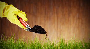 shovel with soil and plant Stock Image