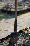 Shovel stuck in the ground ready to work Royalty Free Stock Image