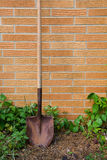 Shovel With Weeds Royalty Free Stock Photos