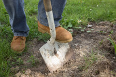 Shoveling Dirt. A workman shoveling dirt for landscape repair Royalty Free Stock Photography