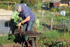 Shovelling manure from a wheelbarrow. royalty free stock photography
