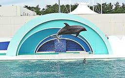 Show av delfin Royaltyfri Fotografi