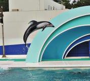 Show av delfin Fotografering för Bildbyråer