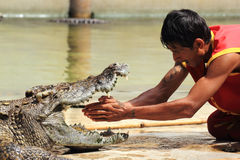 Show av krokodiler arkivfoton