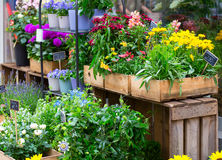 Show-case of flower shop royalty free stock photo