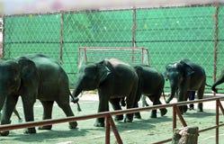Show des Elefanten Lizenzfreies Stockbild
