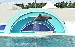 Show of Dolphin. Show of Dolphin in Japan royalty free stock photography