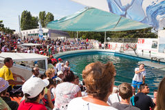 Show at the dolphinarium Royalty Free Stock Photo
