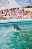 Show at the dolphinarium royalty free stock image