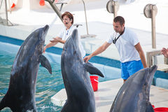 Show at the dolphinarium royalty free stock images