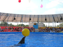Show with dolphins in delphinariums Royalty Free Stock Photos