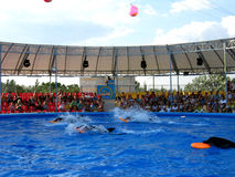 Show with dolphins in delphinariums Royalty Free Stock Photography