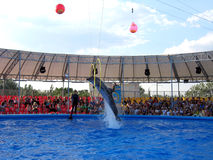 Show with dolphins in delphinariums Royalty Free Stock Images