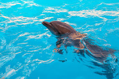 Show with dolphins in the Dolphinarium. Family vacation royalty free stock image