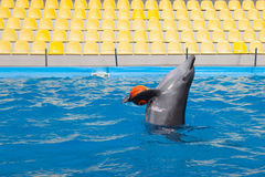 Show with dolphins in the Dolphinarium. Family vacation stock image