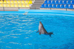 Show with dolphins in the Dolphinarium. Family vacation stock photos