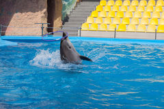 Show with dolphins in the Dolphinarium. Family vacation royalty free stock photo