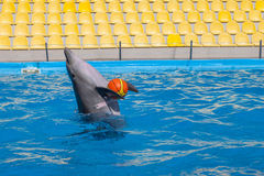 Show with dolphins in the Dolphinarium. Family vacation royalty free stock photos