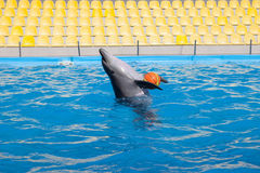 Show with dolphins in the Dolphinarium. Family vacation stock photo