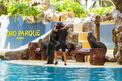 Show with dolphins in the pool, Loro parque, Tenerife Stock Image