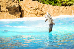 Show with dolphins in the pool, Loro parque, Tenerife Stock Photos