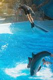 Show with dolphins. royalty free stock image