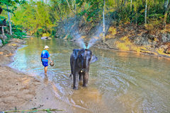 Show Elephant bath On March 14, 2012.in thailand Royalty Free Stock Photos