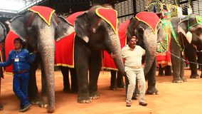 The show of elephants. Pattaya, Thailand, the show of elephants stock video footage