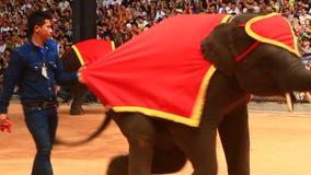 The show of elephants. Pattaya, Thailand, the show of elephants stock footage