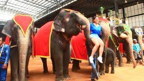 The show of elephants stock video footage