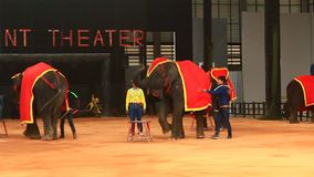 The show of elephants stock video