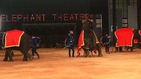 The show of elephants. Pattaya, Thailand, the show of elephants stock video