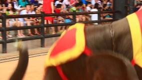 The show of elephants stock footage