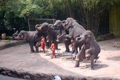 Show elephants. Thailand Royalty Free Stock Image