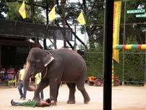 Show of elephants Stock Image