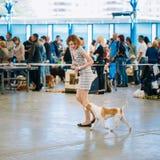 Show för hund för folk- och hundkapplöpningbesökutställning royaltyfria foton